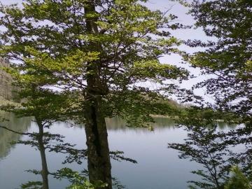 Liqeni i madh Lure